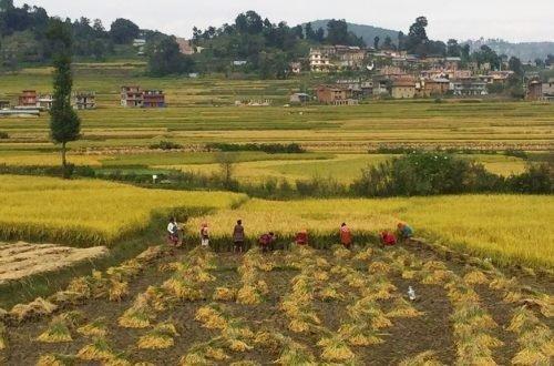 Pokhara - Lumbini